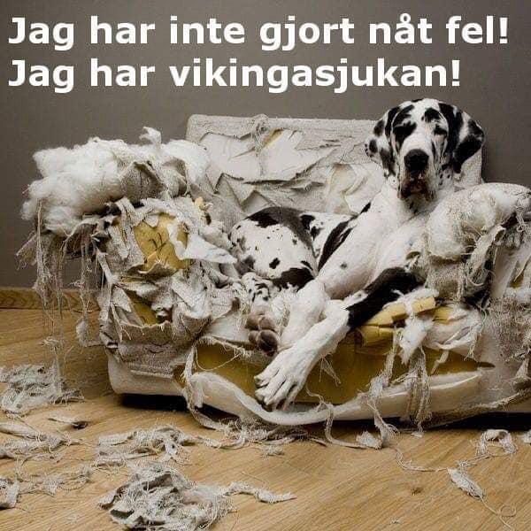 vikingar2