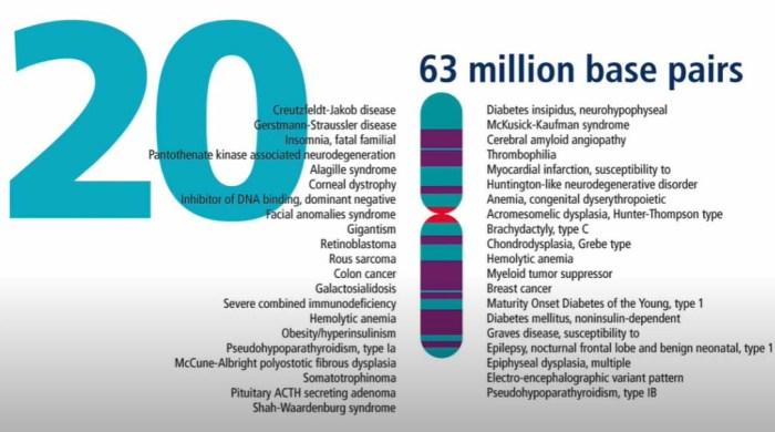 kromosom20
